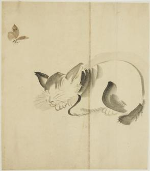 Butterfly and Sleeping Cat