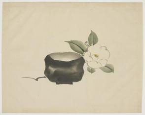 Raku Tea Bowl and White Camellia